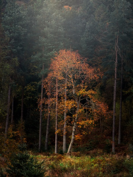 Commended Photo, 'Callendar Woods' by Allan Johnston