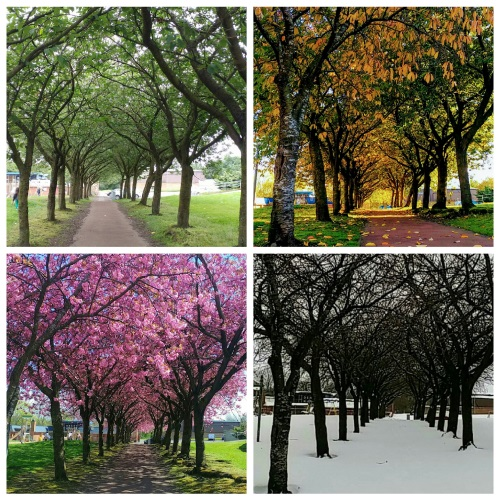 Commended Photo, 'The Four Seasons' by Dorothy Sarabia