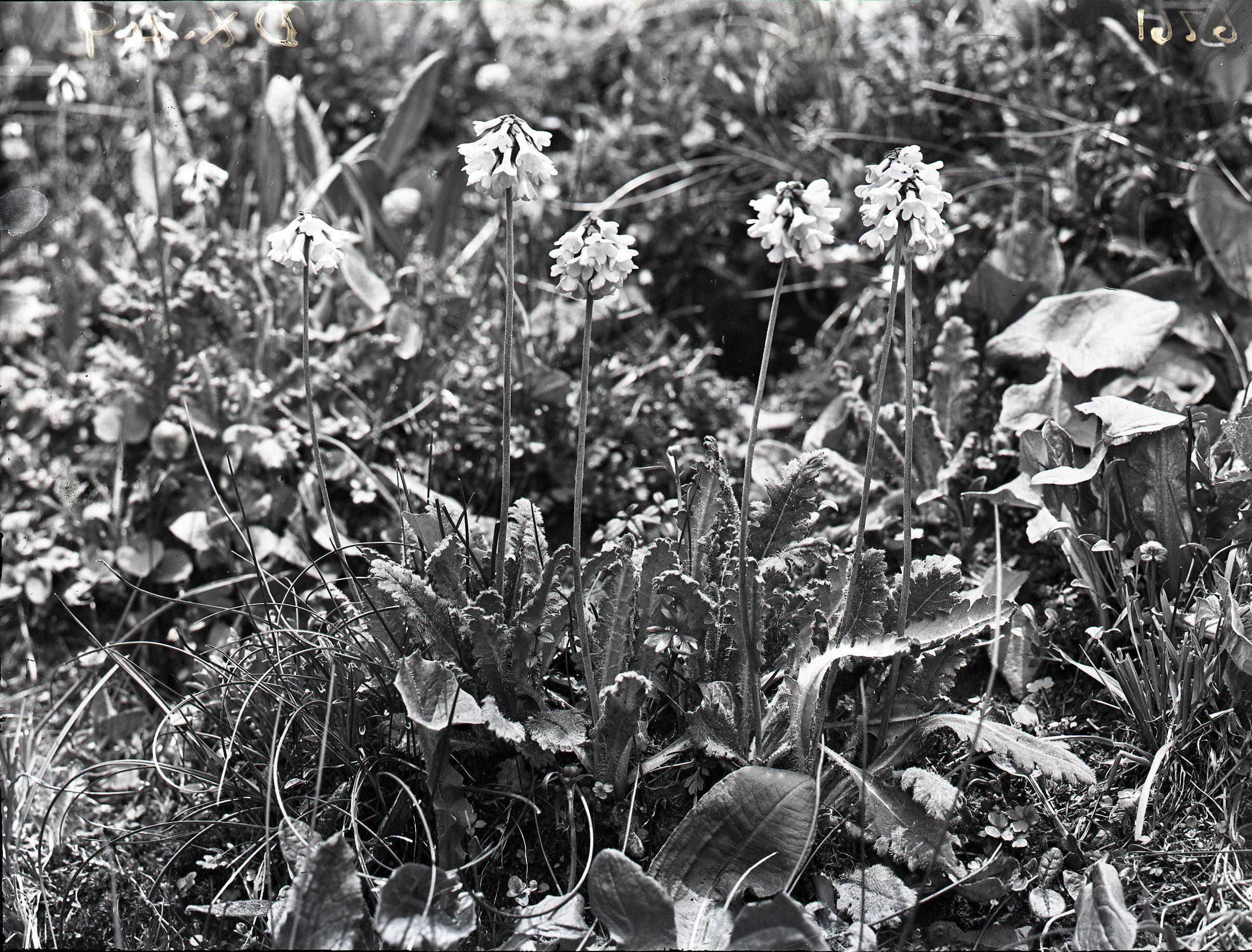 Forgotten Botanist George Forrest