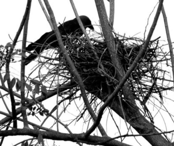 Larbert, Stenhousemuir… but where did the crow nest?